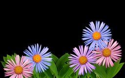 Grenze mit Gänseblümchen Stockfotos