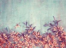 Grenze von blühenden Mandeln auf Weinlesehintergrund Kreativer Toni Stockfoto