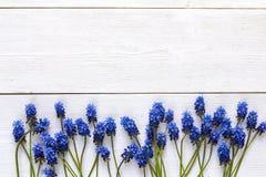Grenze von blauen muscaries blüht auf weißem hölzernem Hintergrund Winkel des Leistungshebels Stockfotos