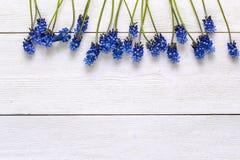 Grenze von blauen muscaries blüht auf weißem hölzernem Hintergrund Winkel des Leistungshebels Stockfoto