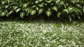 Grenze von den Wirten und von Gras gestreut mit den Blumenblättern Lizenzfreies Stockbild