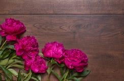 Grenze von Pfingstrosen auf einem hölzernen Hintergrund Blumenauslegung? Hintergrund, Hintergrund, Auslegung der Abbildung Rosa u Stockfoto