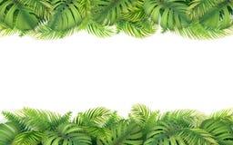 Grenze von tropischen Blättern Stockbild