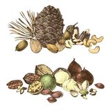 Grenzen met hand getrokken eetbare noten royalty-vrije illustratie