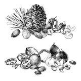 Grenzen met hand getrokken eetbare noten stock illustratie