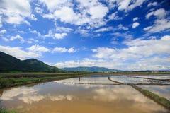 Grenzenlose Wasser-Reis-Felder in Vietnam unter blauem Himmel Lizenzfreie Stockfotos