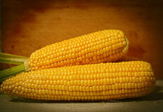 Grões do milho maduro Foto de Stock Royalty Free