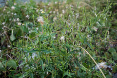 Gress. The bright green of the grass after the rain Royalty Free Stock Photography