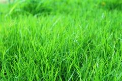 Gress esverdeia o quintal do gramado para o fundo foco brandamente exterior e seleto Foto de Stock