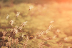 Gress. In warm light Stock Photography