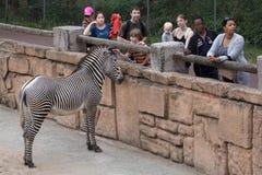 Grevyi Equus зебры ` s Grevy стоковое изображение