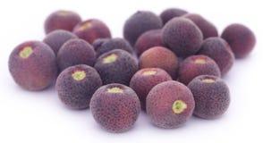 Grewia asiatica or Falsa fruits of Southeast Asia Stock Photo