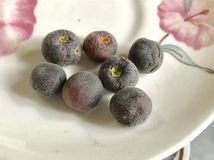 Grewia Asiatica Royalty Free Stock Photo
