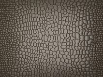 Grey Alligator skin: useful as texture or background. Large resolution Stock Photos