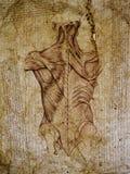 Grey anatomii abstrakt Zdjęcie Royalty Free