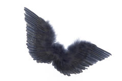 Grey angel wings Stock Photo