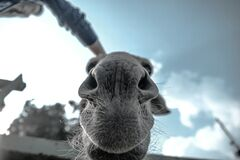 Grey Animal in Grray Scale Photo Stock Photo