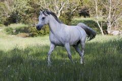 Grey Royalty Free Stock Photos
