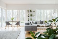 Scandi living room interior. Grey armchairs at wooden table near corner couch with cushions in scandi living room interior Royalty Free Stock Image
