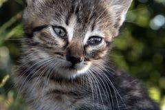 Grey baby kitten face close up Stock Photos