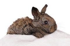 Grey baby rabbit Stock Photos