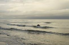 Grey Baltic sea. Stock Photo