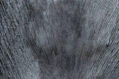 Grey Bark, Spathe da textura do tronco de palmeira imagem de stock royalty free