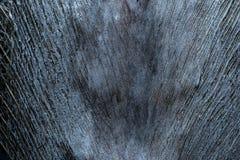 Grey Bark, Spathe da textura do tronco de palmeira fotos de stock royalty free