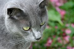 Grey Beauty Immagine Stock Libera da Diritti