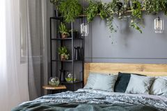 Grey bedroom interior with fresh plants on metal rack with decor. Ations, king-size bed with green bedclothes and window with curtains royalty free stock photo