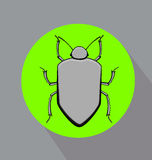 Grey Beetle Insect Vector Photo stock