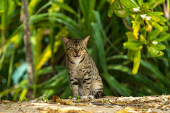 Grey big cat sitting and looking in open air in green background Royalty Free Stock Photos