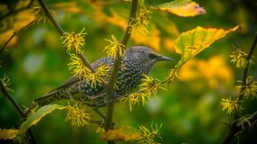 Grey Bird on Green and Yellow Tree Branch during Daytime Royalty Free Stock Photo