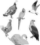 Grey birds collection on white Royalty Free Stock Images