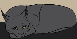 Grey bobcat or lynx. Simple cartoon line art vector illustration Royalty Free Stock Images