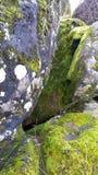 Grey Boulders Covered con el musgo verde imagen de archivo libre de regalías