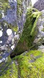 Grey Boulders Covered with Green Moss Royalty Free Stock Image