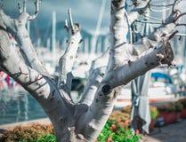 Grey branchy leafless tree. Selective focus stock photos