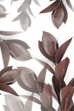 Grey and brown leaves on twigs Stock Images
