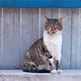 Cat sitting at the fence and looking at the photographer. Stock Photos