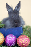 Grey bunny and christmas decorations Stock Images