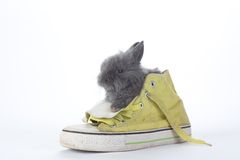 Grey bunny in the gym shoes, isolated Stock Images