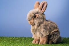 Grey bunny rabbit Stock Image