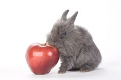 Grey bunny and an red apple, isolated Royalty Free Stock Images