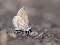 Grey butterfly on grey background Royalty Free Stock Photos
