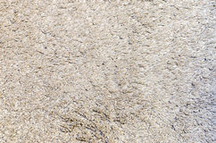 Grey Carpet Texture blanc pour le fond Images stock