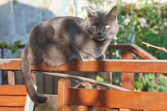 Grey cat on bench Stock Photo