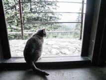 Grey Cat bij Deur Stock Afbeeldingen