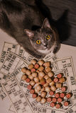 Grey cat and bingo. Tabletop old lotto game with cat. Grey cat and bingo. Tabletop old lotto game with wooden elements with cat Royalty Free Stock Images