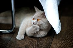 Grey Cat on Brown Textile Beside Stainless Steel Rod Royalty Free Stock Image